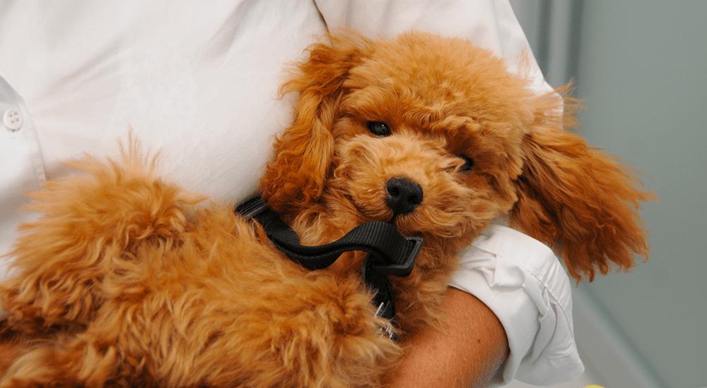 Raccomandazioni per chi va all'estero con gli animali